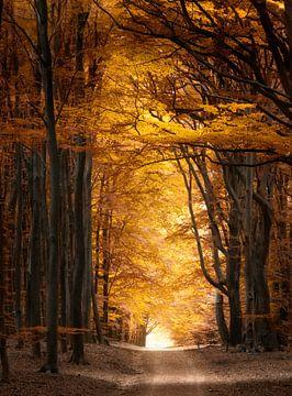 Herbstblätter von Kees van Dongen