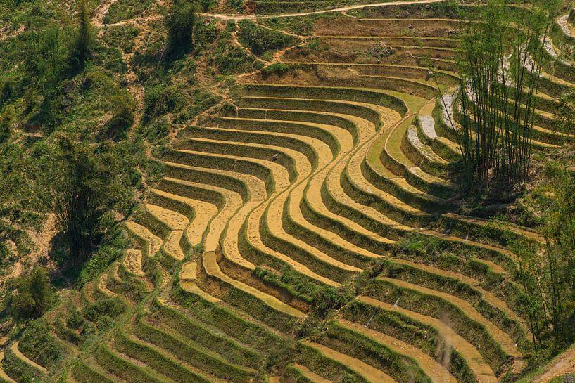 Rice fields van Arkadiusz Kurnicki