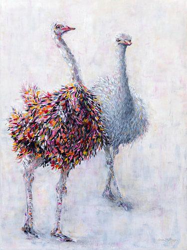 Struisvogelpaar