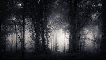 Inkwell Wildwood von Daniel Laan