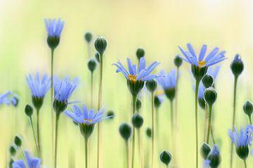Sommerblumen  sur