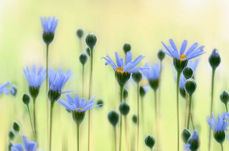 Sommerblumen  van Violetta Honkisz