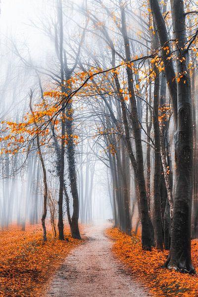In het bos van Anthony Trabano