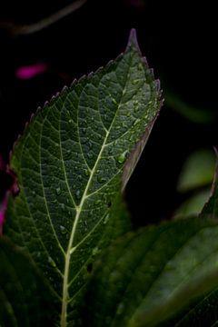 Leaves van Regina van Pijkeren