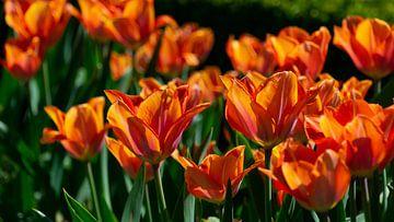 Blumen von Valerie Vlaeminck