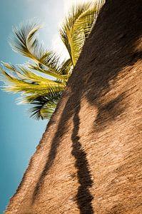 Palmboom in de schaduw.