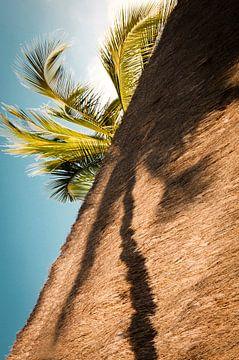 Palmboom in de schaduw.  van