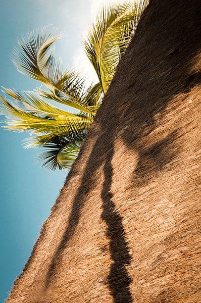 Palmboom in de schaduw.  van Ellis Peeters