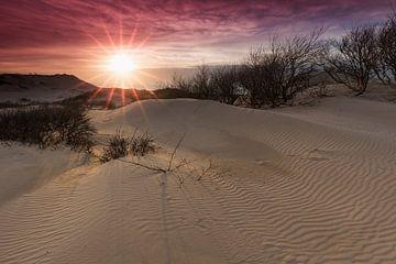 Zonsondergang in Westduinpark von Rob Kints