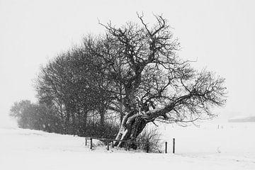 Oude kastanje met vallende sneeuwvlokken, Nederlands winterlandschap, februari 2021 van Iris Brummelman