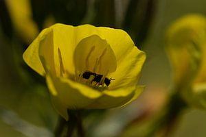 Insect aan het eten. van