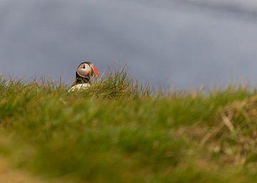 Verstopt in het gras van