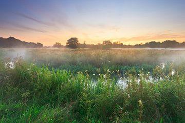 Meanderende beek bij zonsopkomst van Karla Leeftink