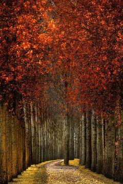 Woodwall van Lars van de Goor