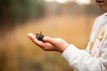 In de palm... van Anouk Pross