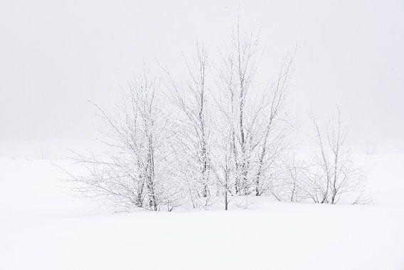 Bomen in de sneeuw van Gonnie van de Schans