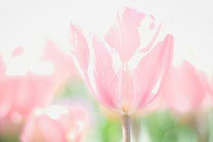 De schoonheid van bloemen, roze tinten van