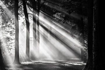 Zonnestralen schijnen over een boslaan in Amelisweerd van