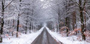 Winter in de Lage Vuursche van