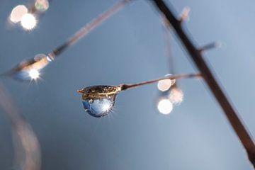 Ein Wassertropfen an einem Zweig im Sonnenlicht von Thomas Heitz