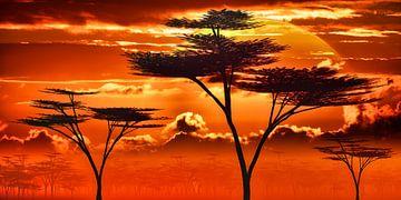 Afrika zonsondergang in de savanne van Max Steinwald