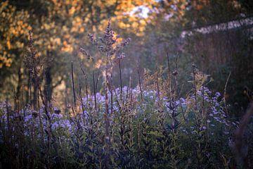 Farben des Herbstes von Gertjan Hesselink
