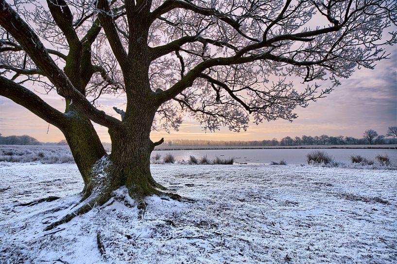 Boom in Winters landschap van Peter Bolman