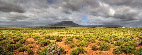 Knersvlakte Zuid-Afrika van Corinne Welp