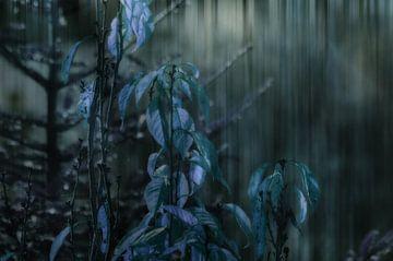 'S Avonds in het bos van Christine Nöhmeier
