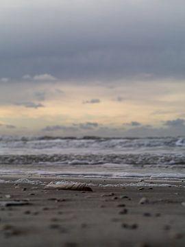 Strand met schelpen van Martijn Wit