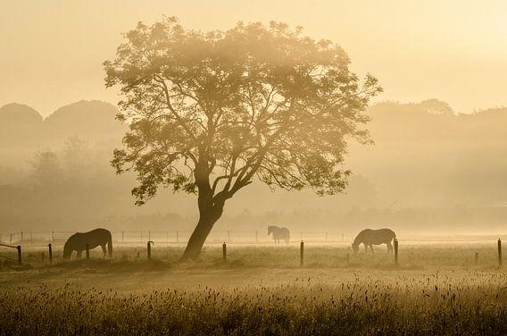 Paarden in de mist van Richard Guijt