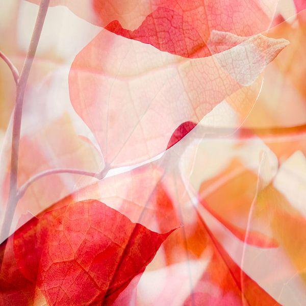 Abstract * 2 van Paula van den Akker