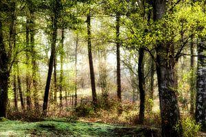 Voorjaarsdag in het bos
