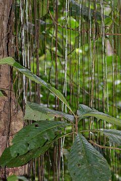 Regenwoud Costa Rica van Mirjam Welleweerd