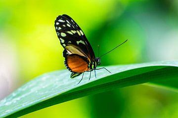 Kleurrijke vlinder von Peter Relyveld