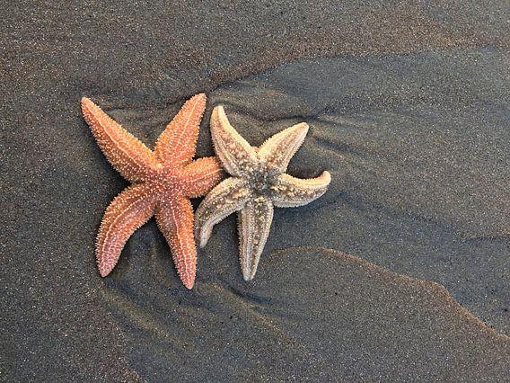 Zeesterren op het strand van Toekie -Art