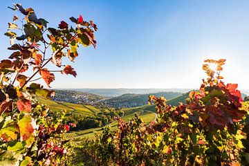 Wijngaarden bij Stuttgart-Rotenberg in het najaar van Werner Dieterich