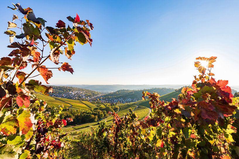 Colorful vineyards in Stuttgart van Werner Dieterich