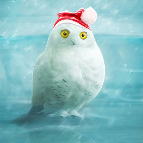 Snowball goes xmas