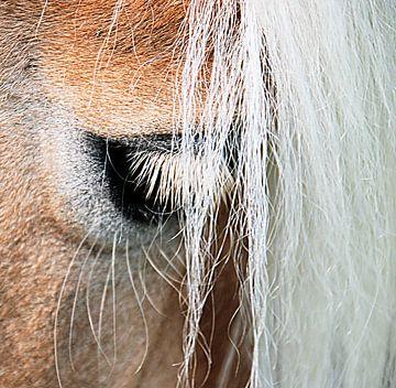 Ojo: het oog van de haflinger sur Sigrid Klop