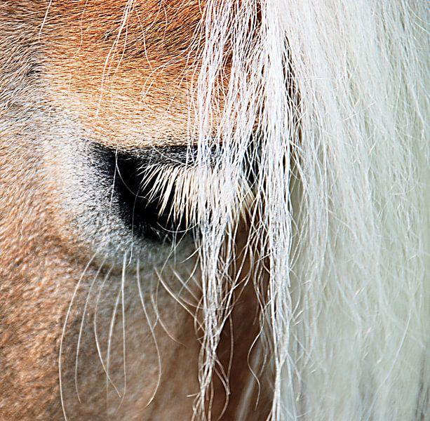 Ojo: het oog van de haflinger von Artstudio1622