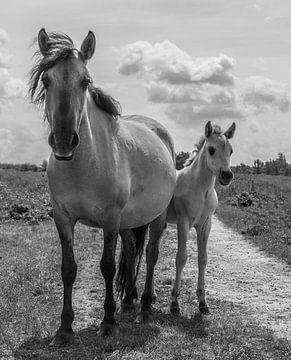 Paard met veulen in zwart wit van Ans Bastiaanssen