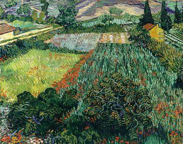 Vincent van Gogh. Feld mit Mohn