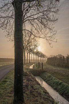 Mooie bomenlaand von Moetwil en van Dijk - Fotografie
