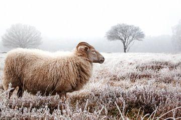 Sheep von Bas Hermsen