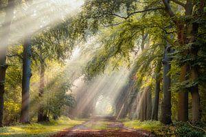 Leuchtende Bäume an einem Sommermorgen in Hilversum von gooifotograaf