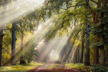 Lichtgevende bomen op een zomerse ochtend in Hilversum van gooifotograaf
