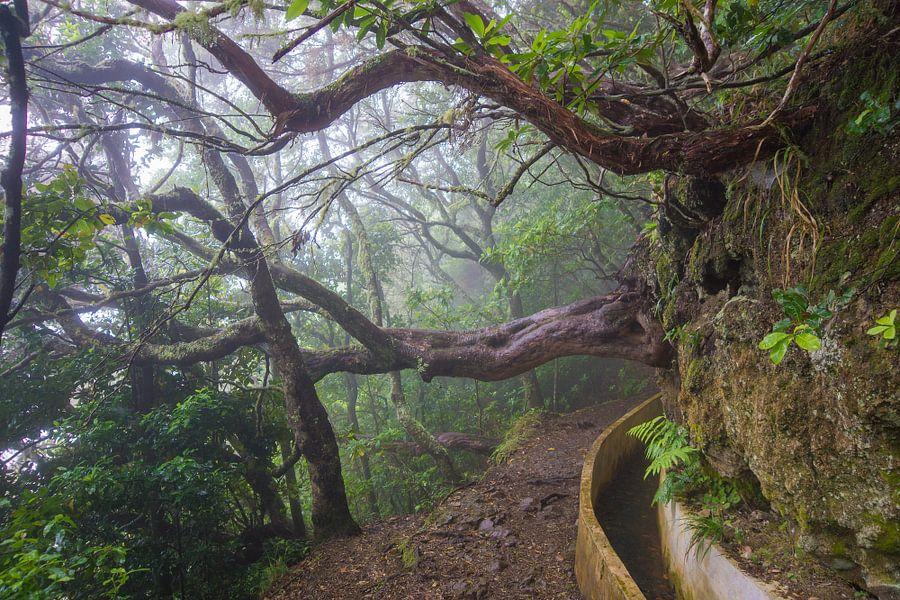 Kromme bomen van Michel van Kooten