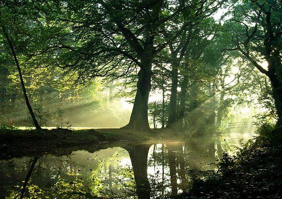 sunbeams between the trees