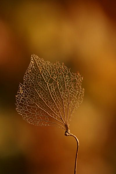 Autumn van Chantal Tamming